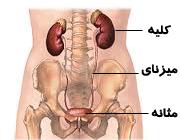 آشنایی با روش های درمان سرطان کلیه و عوارض آن  Understanding the treatment of kidney cancer and its complications.