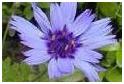 گیاهان-برطرف-کننده-عفونت-های-ادراری-Plants-can-relieve-urinary-tract-infections
