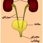 نارسایی مزمن کلیوی،علت عفونت دستگاه ادراری
