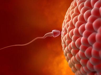 افزایش مقدار اسپرم • درمان زود انزالی • ماری ژوانا و کاهش اسپرم • متخصص ارولوژی • ویتامین A و زود انزالی